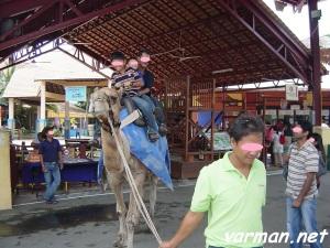 camel ride, Malacca, Melaka
