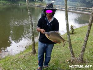 """Ikan Pacu (""""Pacu fish"""") - catch and release policy"""