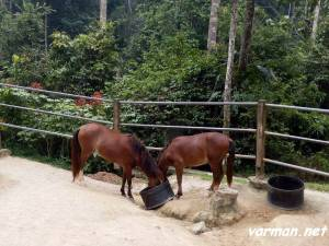 Pony ranch - Taman Pertanian Malaysia